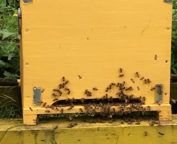 Le api non fanno paura, se le conosci!